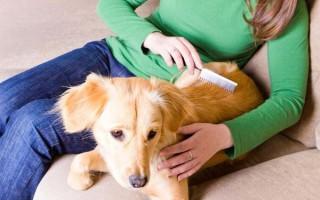 Почему у собаки перхоть: причины появления на спине, почему еще лезет шерсть