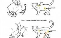 Сахарный диабет у кошек: симптомы, лечение, питание и корма