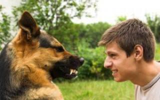 Уход за старой собакой: как помочь, поддержать, делать ли прививки, что если кашель, выделения