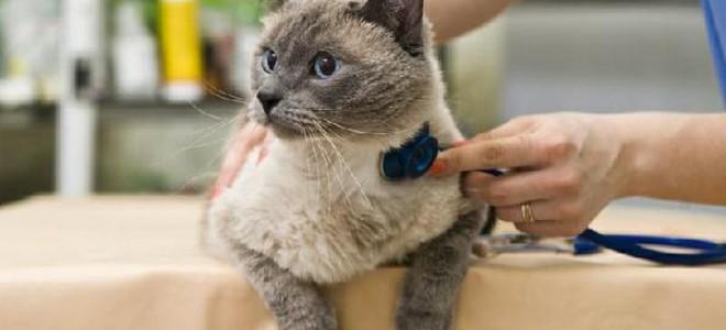Как проглистогонить кошку, чем сделать это правильно в домашних условиях, зачем глистогонить и как часто