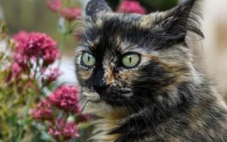 Инфаркт у кошек: бывает ли такое, как заметить симптомы и лечить