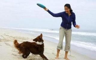 Как играть с собакой (дома, на улице), как научить животное играть с игрушкой, с палкой, с мячом, с детьми, как правильно играть