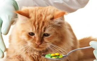 Как дать коту таблетку, как скормить лекарство коту, как правильно провести манипуляцию