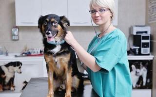 Колит у собак: симптомы, лечение, хронический и язвенный колит, диета и корм
