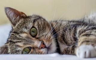 Почему кошки спят в ногах: что это значит, почему коты любят ложиться в ноги хозяину, спать с ребенком, между мужем и женой