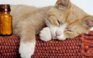 Чем кормить кота при мочекаменной болезни: диета при мбк с учетом вида камней, разрешенная еда