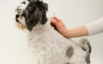 Ифекции и паразиты у собак: диагностика и лечение