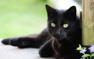 Кошка сильно линяет: что делать, почему сильно линяет летом, постоянно, круглый год, что сделать, чтобы не линяла, когда должна линять