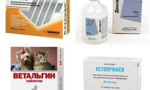 Обезболивающее для собак: какие можно давать в домашних условиях — Кетонал, Мелоксикам, Но-Шпа, Нурофен, Капрофен