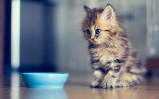 Гигиена и уход за кошкой: что нужно знать хозяину