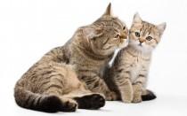 Выкидыш у кошки: что делать, почему появились выделения, признаки самопроизвольного аборта на ранних сроках