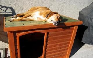 Как приучить собаку к будке: сделать это после квартиры, уличное животное к цепи и будке во дворе, взрослую питомицу