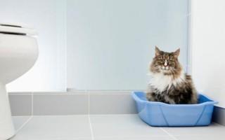 Как приучить кота к лотку, ходить в новый туалет с наполнителем и без, с решеткой