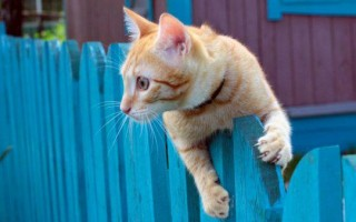 Хламидиоз у кошек: симптомы, анализы на хламидиоз и микоплазмоз, лечение, передается ли человеку, прививка