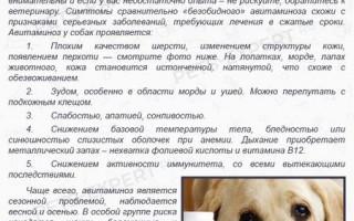 Цирроз у собак: причины появления, симптомы, прогноз, если разложилась печень, как лечить, что такое фиброз, кардоифиброз