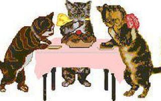 Спейсер для кошек: как применяется ингалятор, как надевать маску, почему популярен Аэрокет