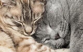 Как подружить кошку с котенком