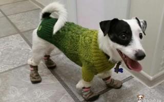 Трещины на лапах у собак, подушечках: причины появления, в т.ч. зимой, чем мазать, лечение, если собака хромает