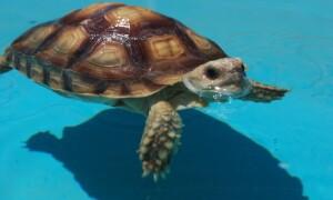 Как правильно купать черепашку