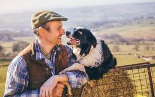 Эхинококкоз у собак: причины, симптомы, лечение, может ли животное быть промежуточным хозяином