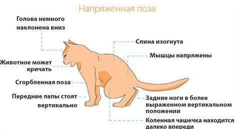 Урологическая диета для котов