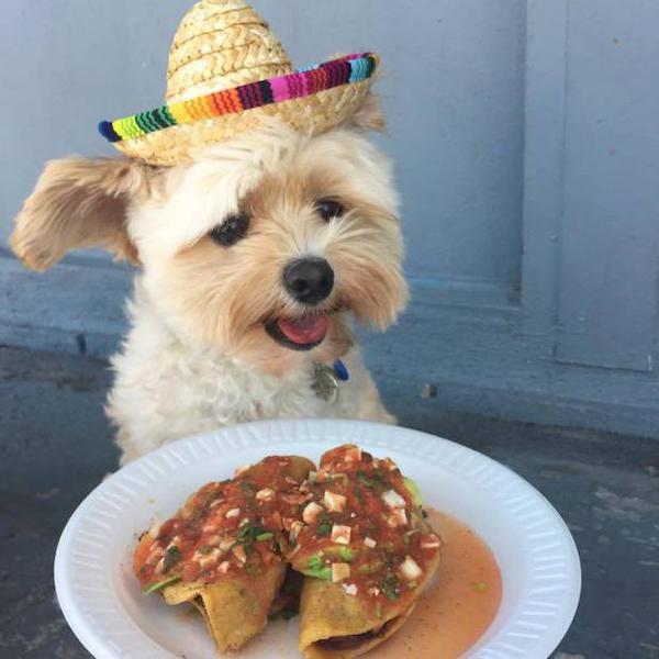 Неправильное питание ведет к ожирению собак