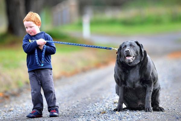 Ожирение у собак Собака, Лишний вес, Полезное, Длиннопост