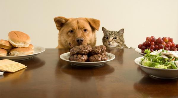 Очень часто аллергию у животных вызывают продукты с нашего стола