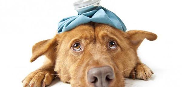 что собакам дают от аллергии