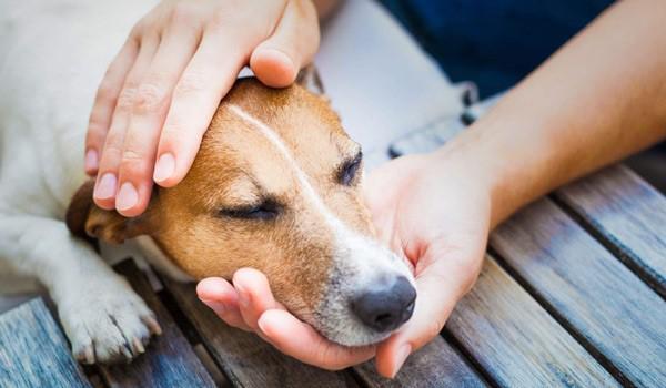 Астма у собак: симптомы