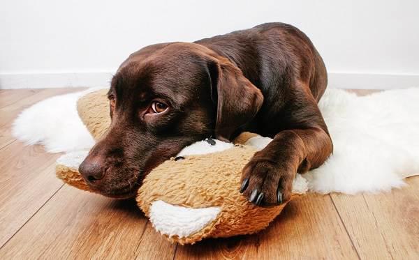 Бешенство-у-собак-первые-симптомы-и-признаки-профилактика-и-лечение