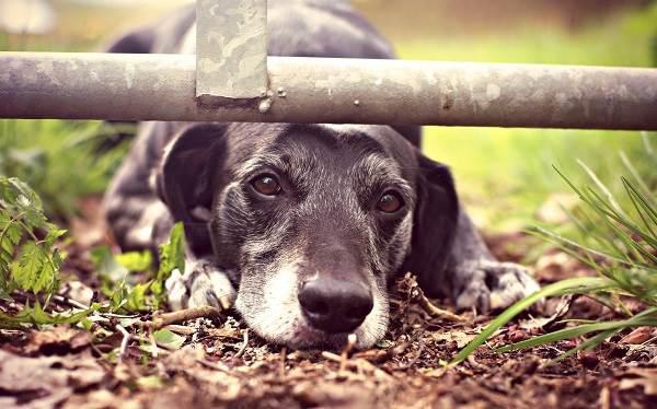 Бешенство-у-собак-первые-симптомы-и-признаки-профилактика-и-лечение-6