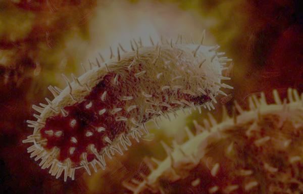 Вирус бешенства под электронным микроскопом