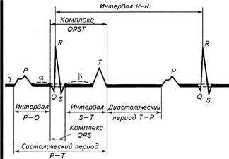 Зубцы и интервалы нормальной ЭКГ (пояснения в тексте)