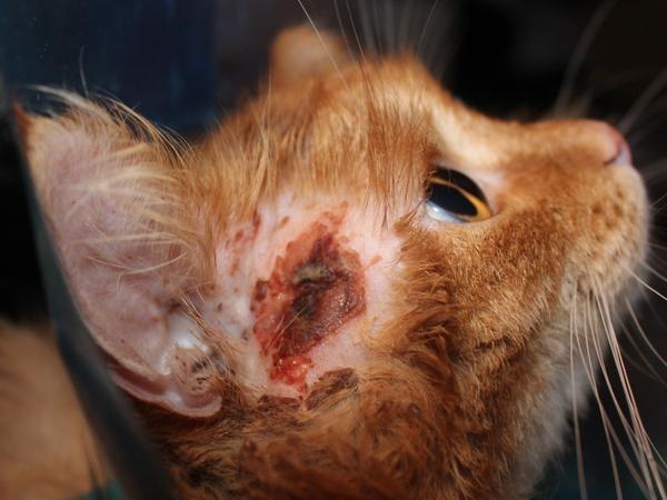 Необработанная рана может привести к разным осложнениям. Экзема - одно из них