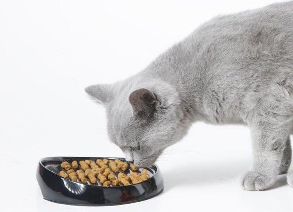 Как лечит гастрит у кошки