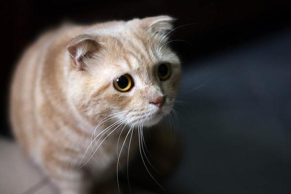 Лечение гастрита у кошек в домашних условиях