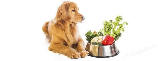 Питание собаки при гастрите