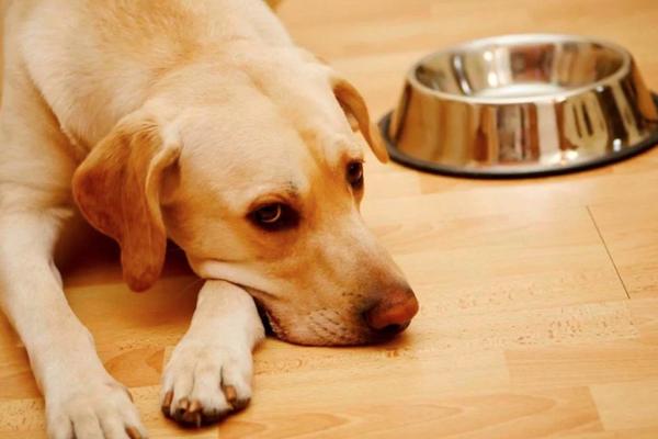 При возникновении гастрита собаке назначают голодную диету