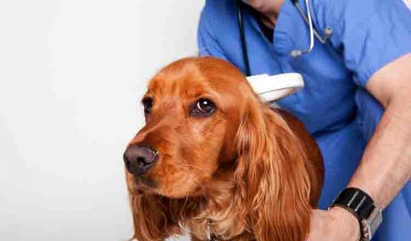 как правильно лечить собаку от гастрита