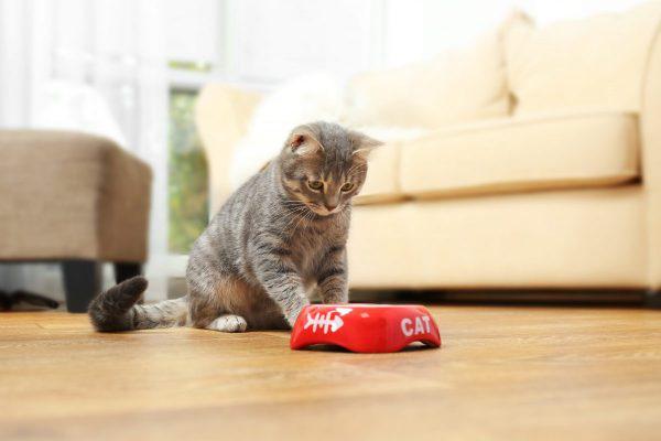 Кот перед миской