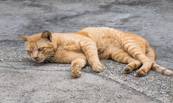 Опасен ли кошачий хламидиоз для человека