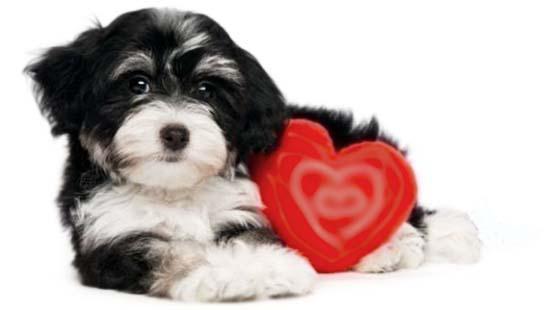 определение инсульта у собаки