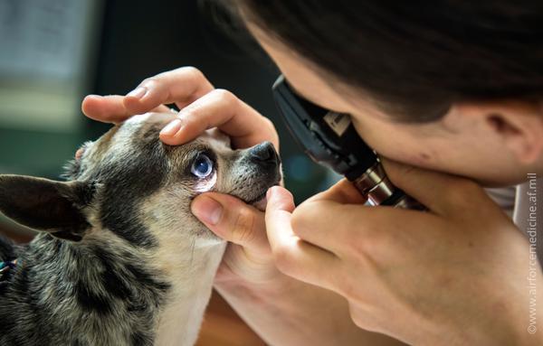 Профилактика инфаркта у собак