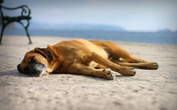 Пес лежит на песке