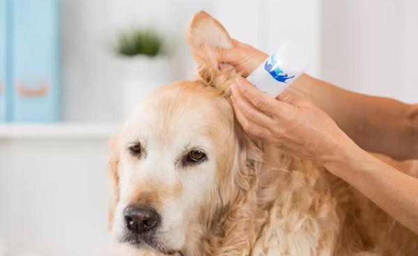 как приучить собаку к чистке ушей