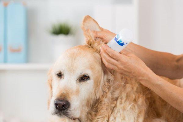 Приученная собака будет переносить чистку спокойно и без волнения