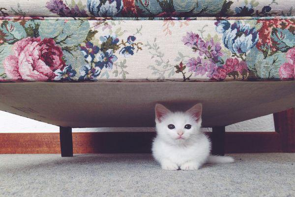 кот под кроватью
