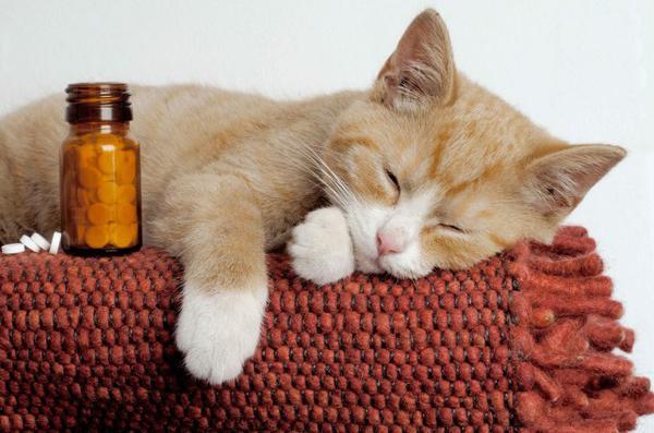 Таблетки для кота
