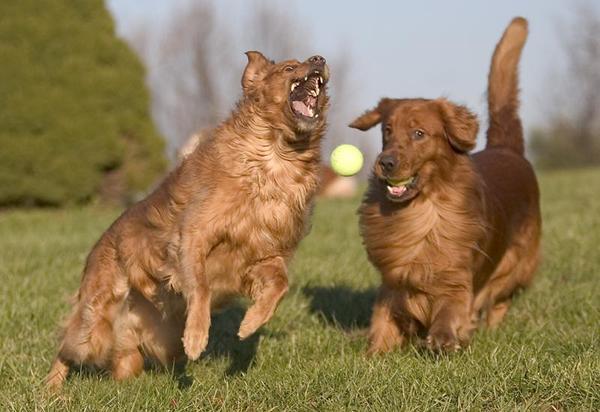 С собаками на улице необходимо играть.